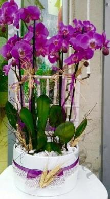 Seramik vazoda 4 dallı mor lila orkide  Aydın incir çiçek online çiçek gönderme sipariş