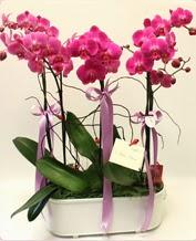 Beyaz seramik içerisinde 4 dallı orkide  Aydın incir çiçek ucuz çiçek gönder