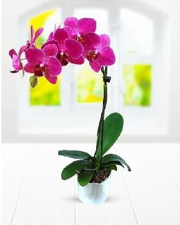 Tek dallı mor orkide  Aydın incir çiçek çiçek satışı