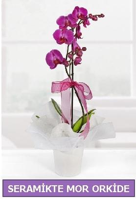 Seramik içerisinde birinci kalite tek dallı mor orkide  Aydın incir çiçek incir çiçek İnternetten çiçek siparişi