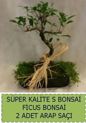 Ficus S Bonsai ve arap saçı  Aydın incir çiçek çiçekçi telefonları