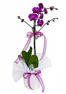 Tekli Mor Orkide  Aydın incir çiçek çiçek yolla