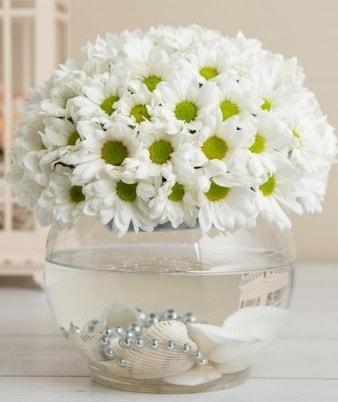 Fanusta beyaz Papatya  Aydın incir çiçek çiçek satışı