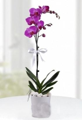 Tek dallı saksıda mor orkide çiçeği  Aydın incir çiçek çiçekçiler