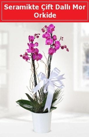 Seramikte Çift Dallı Mor Orkide  Aydın incir çiçek anneler günü çiçek yolla